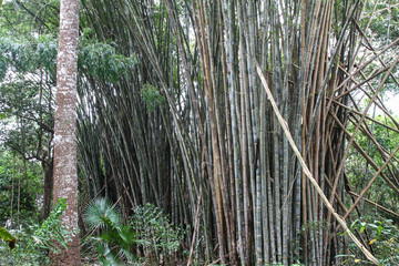 bamboo trunks in a bamboo forest