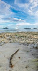Sea worm near the beach. Bohol Panglau