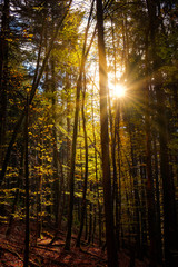 Sunrays in colorful autumn forest