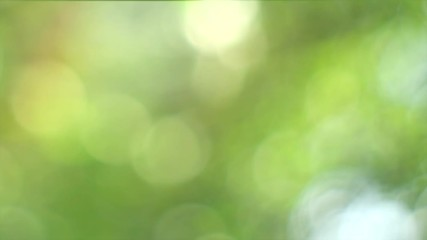 Wall Mural - Nature blurred green background. Beautiful sun shine through the blowing on wind tree green leaves. Blur abstract bokeh with sun flare. Slow motion. 4K UHD video footage. 3840X2160