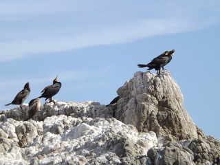 Birds On Rocks At Sea