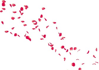 The petals of a red rose fly far into the distance Wall mural