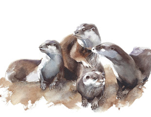 Otters family pack wildlife water animal watercolor painting illustration isolated on white background