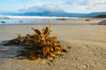 Seaweed on the Beach