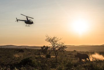 White rhino with helicopter