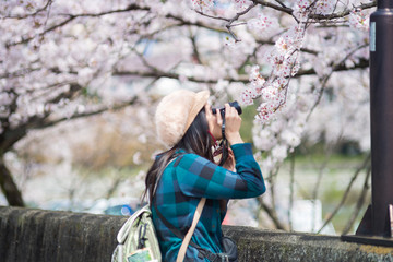 An asian woman traveler was sightseeing Cherry Blossom(Sakura) - Spring in Japan