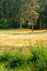 vertical yellowed mowed grass near green forest and tall weeds