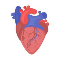 Heart organ vector illustration