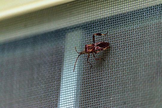 large beetle type bug on window screen