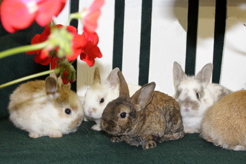 Bunnies huddle together under bright flowers