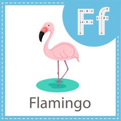 Illustrator of Flamingo bird