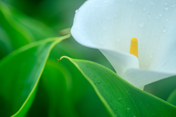 closeup of beautiful white flower blooming in the garden