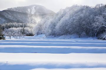 舞い上がる雪と雪が積もった山間の水田
