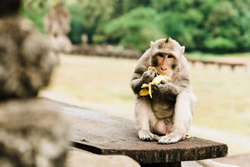 Monkey's of Siem Reap