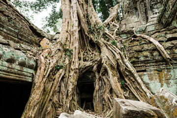 Temple Ruins of Siem Reap Cambodia