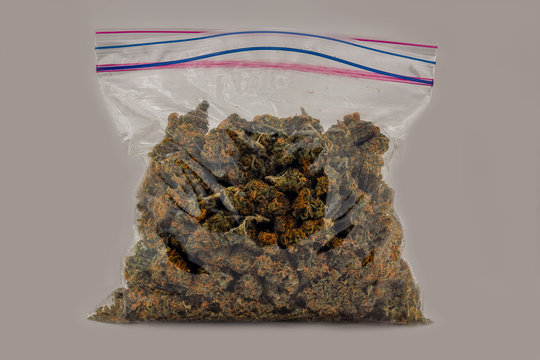 A zip top sandwich bag filled with Cheese OG marijuana buds isolated with a white background.