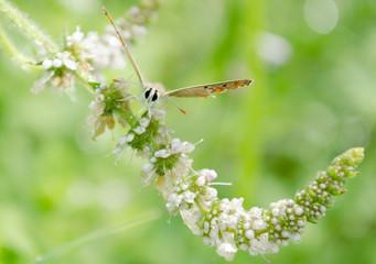 Farfalla spicca il volo