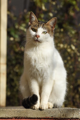 Portrait of beautiful cat looking away. Domestic tabby shorthaired cat outside