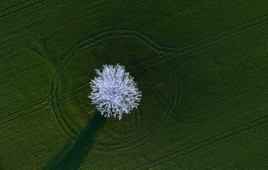 View from above on frozen tree in green field. Tree covered with hoarfrost, standing in the green field. Contrast of winter and spring motives combined in one picture. Artistic view of two seasons.