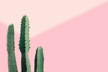 Fotobehang Cactus Green cactus on a pastel pink background with copy space