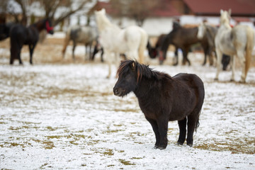 Pony horse during winter
