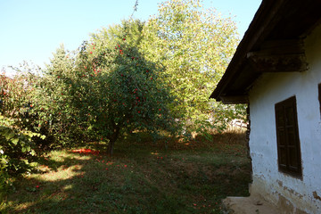 The house in the apple orchard