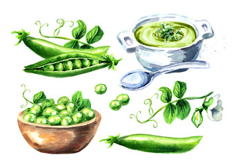 Green peas set, Watercolor hand drawn illustration,  isolated on white background