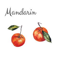 Mandarin watercolor on a white background. Hand draw painting