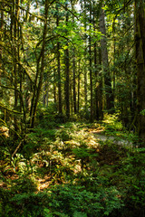 bright light and heavy shadows in forest with fern and moss