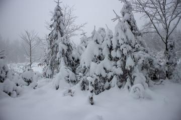 verschneiter Wald beim Tanzplan (Sebnitz)