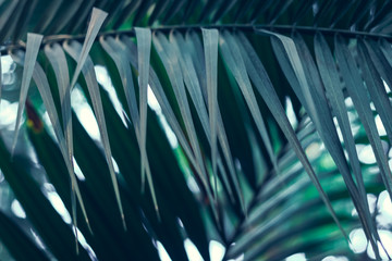 green plant with palm leaves grow in forest. Nature background