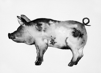 painted ink watercolor illustration, black pig, boar on white background.