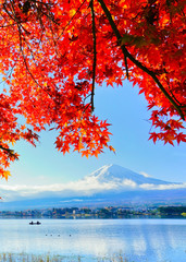 Tuinposter Rood View of the maple leaves in autumn at Lake Kawaguchi in Japan with the Mount Fuji in the background.