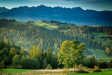Piękny zielony wschód w górach