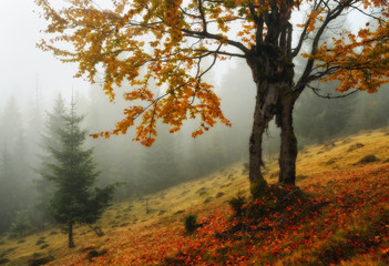 picturesque autumn dawn. foggy morning in the Carpathian mountains