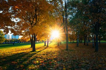 Dramatic light leak at autumn park landscape background