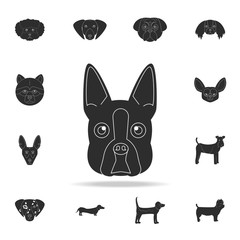 Boston terrier face icon. Detailed set of dog silhouette icons. Premium graphic design. One of the collection icons for websites, web design, mobile app