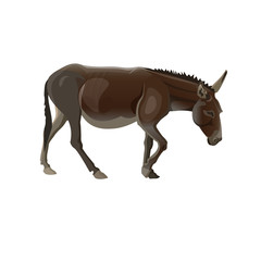 Walking donkey vector