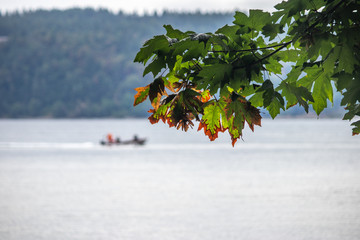 maple branch in front of boat on water