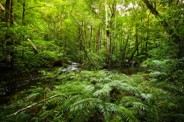 plant tropical fern forest / nature green plant rainforest tropical jungle fern tree with stream river