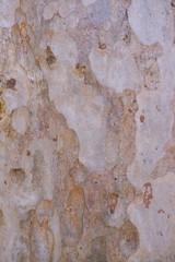 Foto auf AluDibond Alte schmutzig texturierte wand wood tree texture background wallpaper