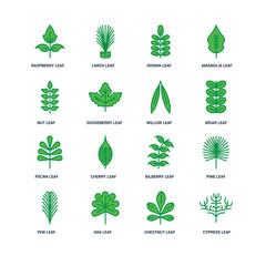 Set Of 16 icons such as Cypress leaf, Chestnut Oak Yew Pine Rasp