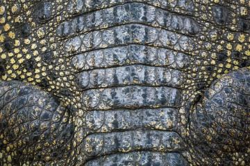 Poster Crocodile Details of crocodile skin.