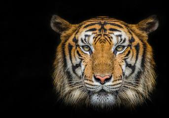 Photo sur Plexiglas Tigre Tiger face on black background.