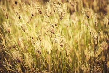 Vintage Grasses Field