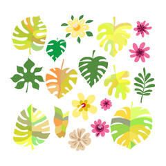 Set of tropical flowers1