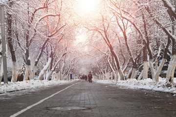 pedestrian way tree winter