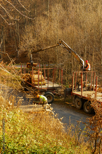 Timber Harvesting In The Forest Wood Transport Stock Photo And
