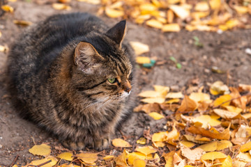 Fluffy tabby cat in the yard in autumn