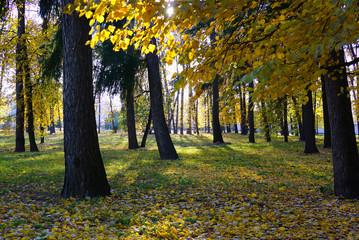 Autumn Park. The sun's rays break through the autumn foliage. Moscow